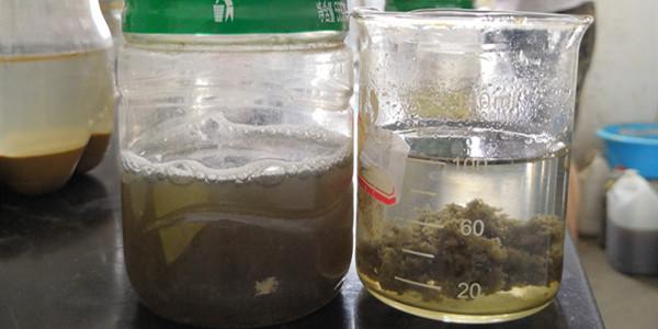 河南荥阳市某屠宰场使用高分子絮凝剂成功案例